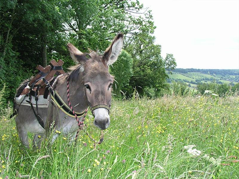 photo d'un âne qui broute lors d'une randonnée dans la vallée de l'Aude dans les pyrénées