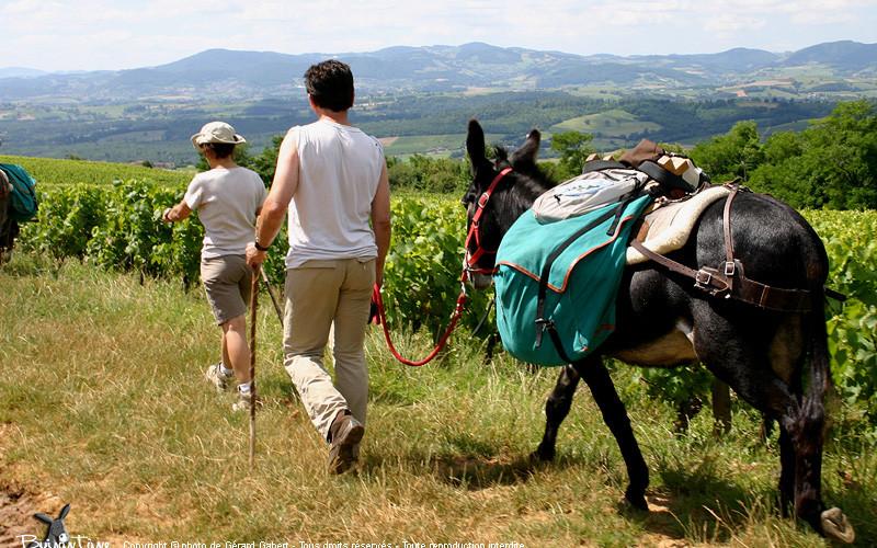 randonnée en âne dans la vallée de l'Aude